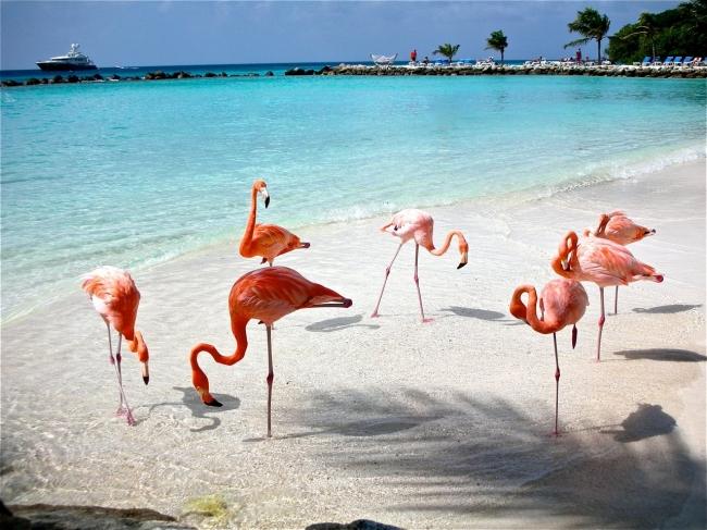 TURISMO EN ARUBA Y SAINT MARTIN CON VUELOS DESDE CORDOBA - Buteler Viajes