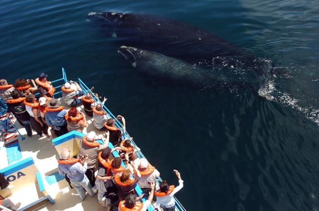 VIAJES A PUERTO MADRYN DESDE CORDOBA - Puerto Madryn /  - Buteler Viajes