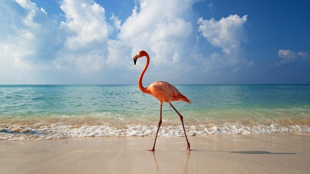 VIAJES A BAYAHIBE DESDE CORDOBA- REPUBLICA DOMINCANA - Bayahibe /  - Buteler Viajes